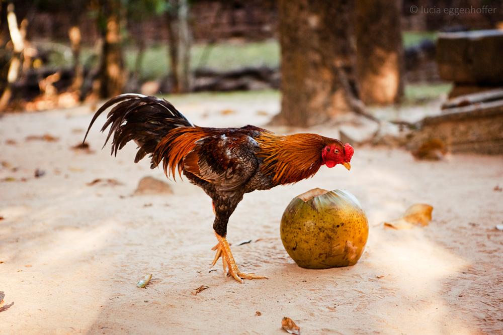 cambodia-lucia-eggenhoffer-019